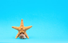 Summer Background, Seaside Vacation, Starfishes, Seashells And On A Turquoise Blue Background