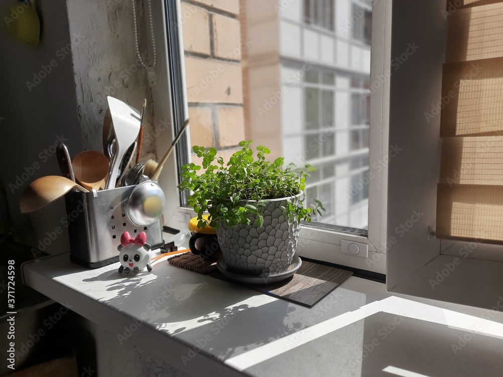 Fototapeta Mint in a pot in the kitchen on the windowsill