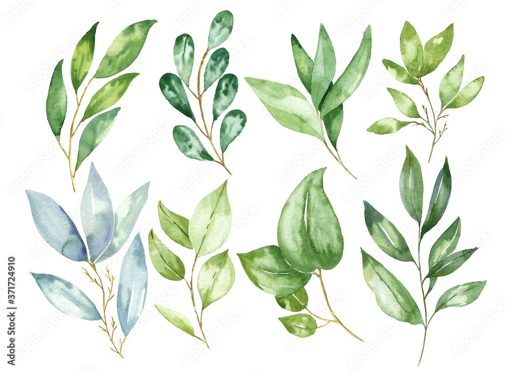 Fototapeta Hand drawn watercolor leaves and branches isolated on white background. Watercolour botanical illustration.