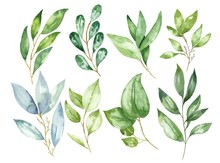 Hand Drawn Watercolor Leaves A...