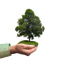 Hand Holding Green Tree Over Green Landscape. Environmental Conservation Concept