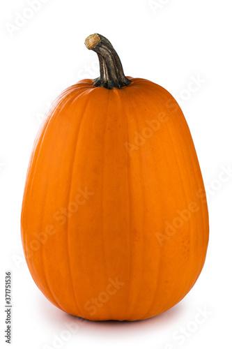 Fototapeta One tall orange pumpkin obraz