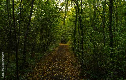 Billede på lærred camino bosque verde (horizontal)