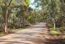 Dirt Road Through Idyllic Bush...