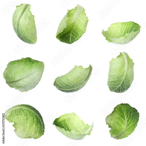 Photographie Fresh Savoy cabbage leaves on white background