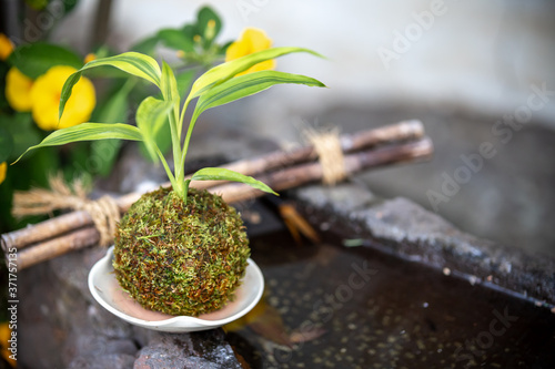 Fototapeta 苔盆栽 和風イメージ