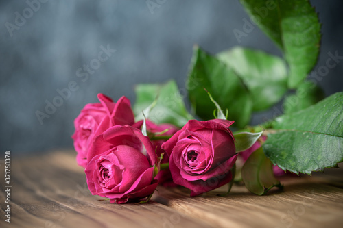 バラの花 Fototapet