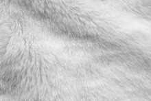 White Fur Fabric Texture Backg...