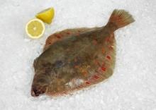 Fresh Plaice, Pleuronectes Platessa On Ice