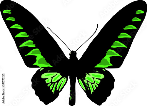 Vector of a Rajah Brooke butterfly isolated on white background Canvas Print