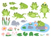 Cartoon Frogs. Green Cute Frog, Egg Masses, Tadpole And Froglet. Aquatic Plants Water Lily Leaf, Toads Wild Nature Life Vector Set. Reed And Flowers. Character On Pond Catching Insect