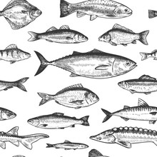 Fish Seamless Pattern. Hand Drawn Different Sea And River Fishes, Marine Underwater Life Monochrome Print Wallpaper Sketch Vector Texture. Perch And Anchovy, Herring And Mackerel, Seabass