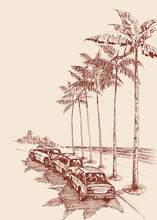 Palm Trees Road, Cars Parked U...