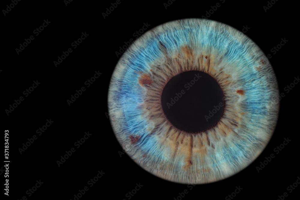 Fototapeta blue eye on black background