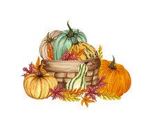 Watercolor Pumpkin Composition, Floral Pumpkins In A Basket, Halloween Clip Art, Autumn Design Elements, Fall Arrangement, Harvest Illustration Isolated On White Background
