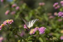 Fiori Fucsia Con Farfalla