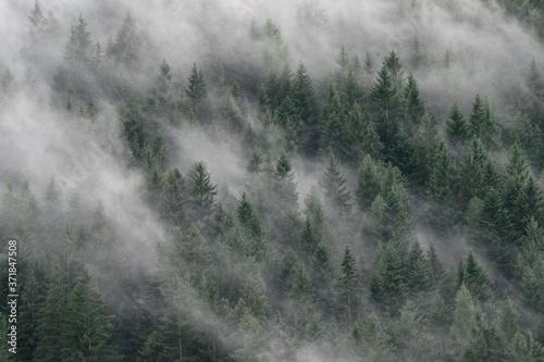 Fototapety do przedpokoju  mglisty-las-w-poludniowym-tyrolu-wlochy