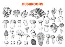 Edible Mushrooms Hand Drawn Sk...