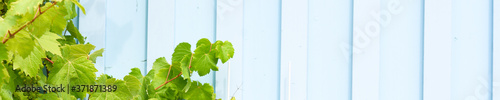 Foto Green plants on wooden background