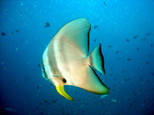 Underwater Image Of A Friendly...