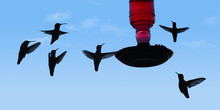 Hummingbirds Are Seen Around A Feeder In This Photo Illustration.