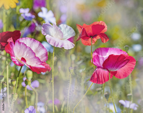 Fototapety, obrazy: light red flower summer flowers and green leaf tropical pattern on blue sky.