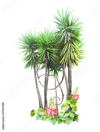 Photo Frame with palm, liana branches and tropical leaves