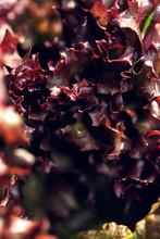 Close Up Organic Fresh Beautif...