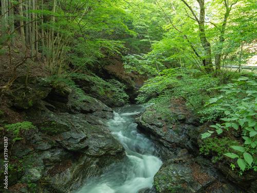Fototapeta 夏の入川渓谷の渓流
