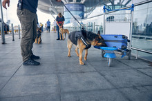 Officer And Drug Detection Dog Checking Luggage In Airport