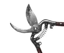 Vineyard Scissors, Shears Isol...