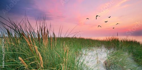 in den Dünen an der Küste Fototapet