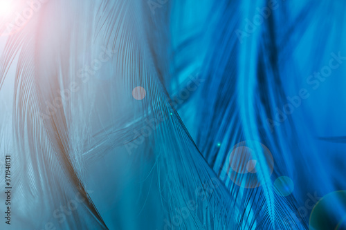Papel de parede Beautiful dark green blue feather texture pattern background with flare light
