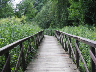 Panel Szklany Podświetlane Mosty Wooden bridge trough the forest in a nature park. The concept of ecotourism