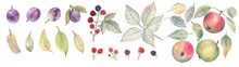 Big Set Of Fruits And Berries Painted In Watercolors On A White Isolated Background. There Are Plums, Apples, Wild Blackberries And Leaves. Element For Summer And Autumn Design.