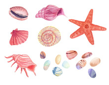Watercolor Shells, Seat Of Sea...