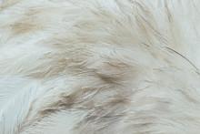 Plumes D'autruche Blanches - Arrière Plan Texture Plumes