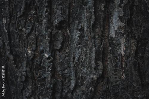 Fotografia, Obraz bark of a tree1