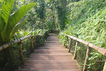 Wooden Steps With A Bamboo Han...