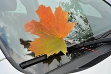 Bright Maple Leaf On The Car W...