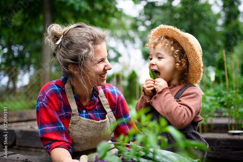 Valokuva Mother with small daughter gardening on farm, growing organic vegetables