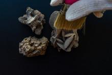 Limpiando Restos Fósiles