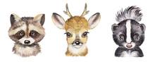 Watercolor Set With Forest Animals. Raccoon, Deer, Skunk, Cute Baby Animals.