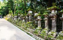 Temple Lanterns In Japan