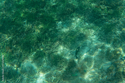 Fotografie, Obraz a fish in broken coral reef