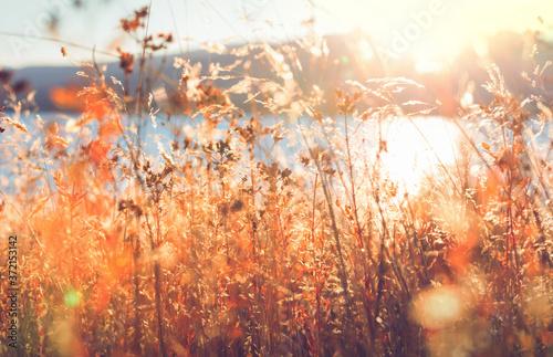 Autumn meadow Billede på lærred