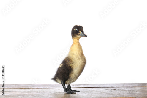Cute duckling on table against white background Canvas-taulu