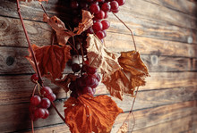 Vine With Dried Leaves And Ripe Grapes.