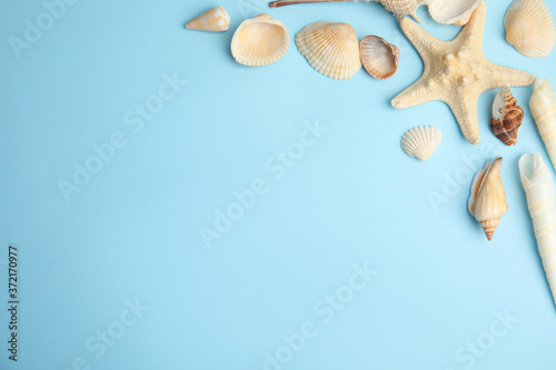 Fototapeta Different beautiful sea shells on light blue background, flat lay