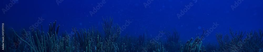 Fototapeta coral reef underwater landscape, lagoon in the warm sea, view under water ecosystem